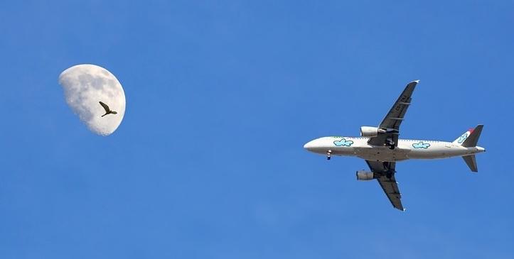 הסכנות של ציפורים לכלי הטיס