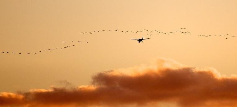 תאונות מטוסים עם ציפורים