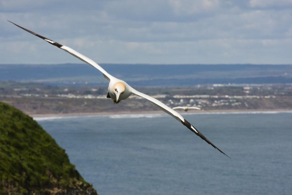 ביומימטיקה בדאיית ציפורים